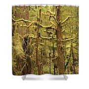 Waltzing In The Rainforest Shower Curtain