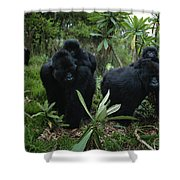 Two Mother Gorillas Carrying Shower Curtain