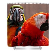 Two Parrots Closeup Shower Curtain