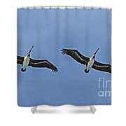 Two Pelicans In Flight Shower Curtain