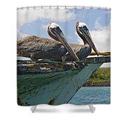 Two Pelicans Pelecanus Occidentalis On Shower Curtain