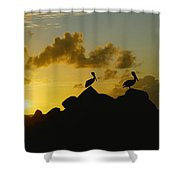 Two Pelicans Perched On Rocks Shower Curtain