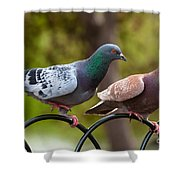 Two Pigeons Shower Curtain