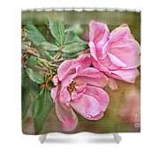 Two Pink Roses II Blank Greeting Card Shower Curtain