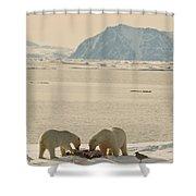 Two Polar Bears Eat A Carcass As Sea Shower Curtain