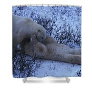 Two Polar Bears Wrestle In The Snow Shower Curtain
