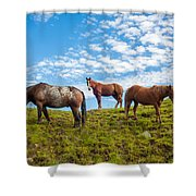 Two Quarters And An Appaloosa Shower Curtain