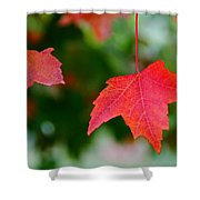 Two Red Maple Leaves Shower Curtain