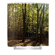 Two Roads Diverged Shower Curtain