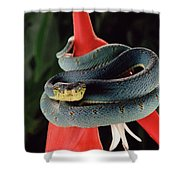 Two-striped Forest Pit Viper Bothrops Shower Curtain