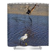 Two Strutting Egrets Shower Curtain