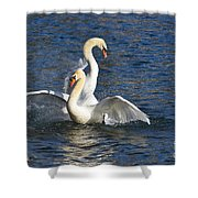 Two Swans Playing Shower Curtain