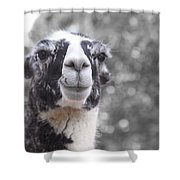 Two-toned Shower Curtain