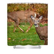 Two Visitors Shower Curtain