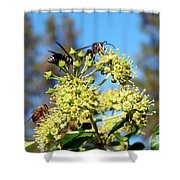 Two Wasps And A Bee Shower Curtain
