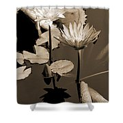 Two Waterlilies Sepia Shower Curtain