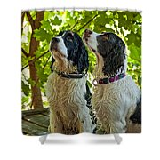 Two Wet Puppies Shower Curtain