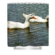 Two White Ducks Shower Curtain