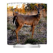 Two White Tails Shower Curtain
