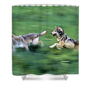 Two Wolves Running Through Meadow Shower Curtain