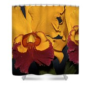 Two Yellow And Red Orchids Shower Curtain