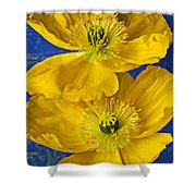Two Yellow Iceland Poppies Shower Curtain