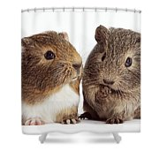 Two Young Guinea Pigs Shower Curtain
