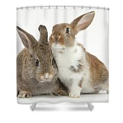 Two Young Rabbits Shower Curtain
