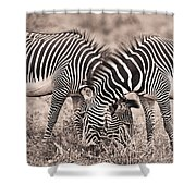 Two Zebras Grazing Together Kenya Shower Curtain