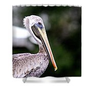 Ugly Beauty - Brown Pelican Shower Curtain