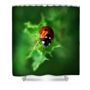 Ultra Electro Magnetic Single Ladybug Shower Curtain