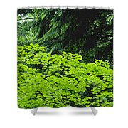 Umbrella Of Trees In Forest Shower Curtain