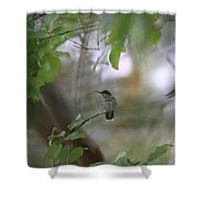Under The Canopy Shower Curtain