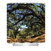Under The Oak Canopy Shower Curtain