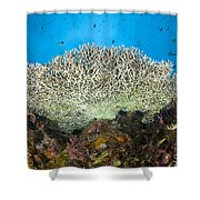 Underside Of A Table Coral, Papua New Shower Curtain by Steve Jones