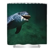 Underwater Close-up Of Smiling Shower Curtain