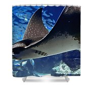 Underwater Flight Shower Curtain by DigiArt Diaries by Vicky B Fuller
