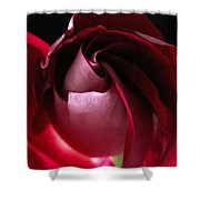 Unfolding Rose Shower Curtain