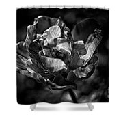 Unfurled Shower Curtain