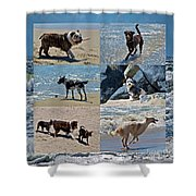 Uninhibited Creatures Shower Curtain