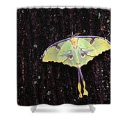 Unique Butterfly Resting On Tree Bark Shower Curtain