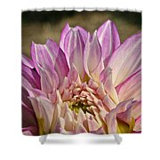 Unnamed Dahlia 3002 Shower Curtain