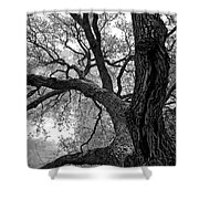 Up Tree Shower Curtain