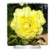 Upbeat Yellow Rose Shower Curtain