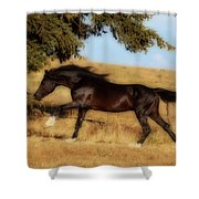 Uphilll Gallop Shower Curtain