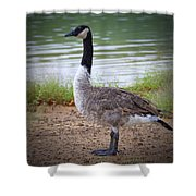 Upright Stance Shower Curtain