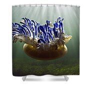 Upside-down Jellyfish Cassiopea Sp Shower Curtain