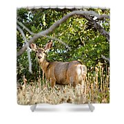 Utah Mule Deer Shower Curtain