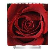 Valentine Rose - Color Shower Curtain