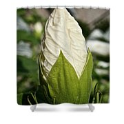 Vanilla Hibiscus Shower Curtain
